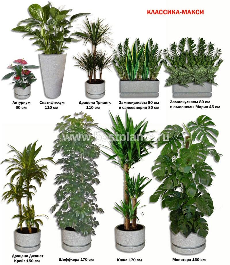Цветы комнатные растения кактусы и