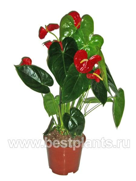 Комнатные цветы на т с