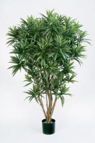 Искусственные растения: Драцена Рефлекса