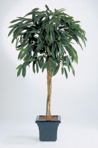 Искусственные растения: Лонгифолия зонтичная