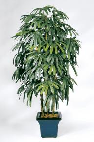 Искусственные растения: Рапис широколистный