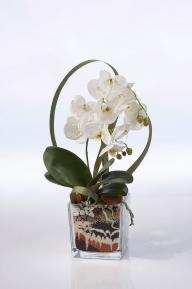 Композиции из сухоцветов Фаленопсис в стеклянном кубе