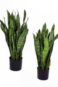 Искусственные растения: Сансевиерия зеленая
