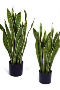 Искусственные растения: <em>интерьера</em> Сансевиерия желтая